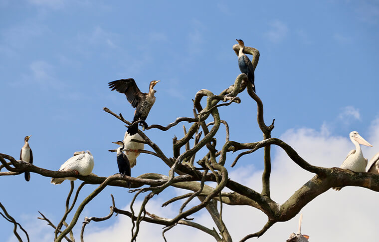 Flock of birds sitting in a bare tree